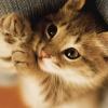 飞翔猫网 - 致力于正规轻松的网上兼职、网上赚钱项目